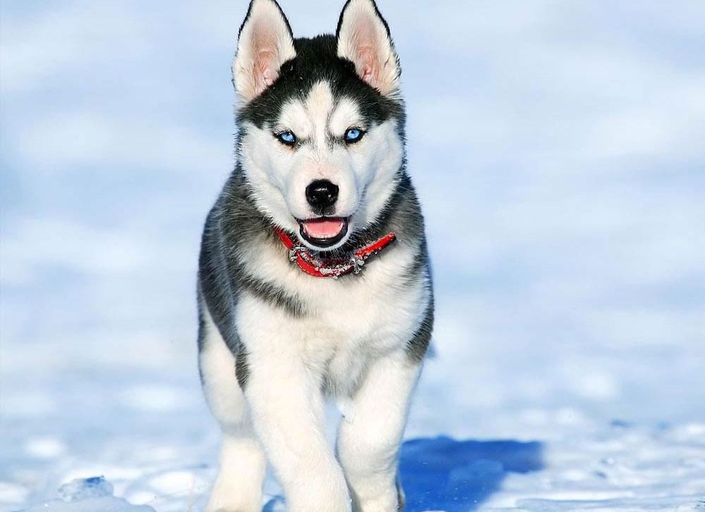 greek-dog-names