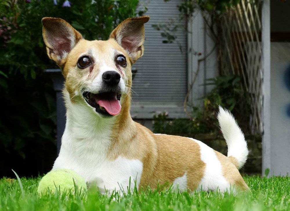 japanese-dog-names